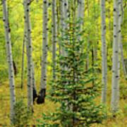 Aspen Christmas Tree Poster