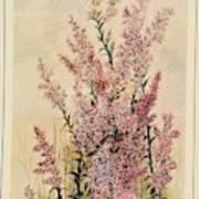 Australian Wild Flowers  8 Poster