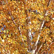 Autumn Golden Leaves Poster