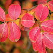 Autumnal Hues Poster