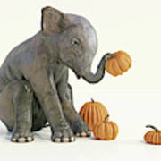 Baby Elephant And Pumpkins Poster