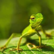 Beautiful Animal In The Nature Habitat Poster