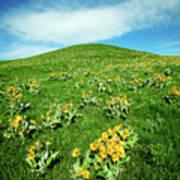 Beaver Creek Flowers Poster