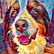 Bernese Mountain Dog Poster