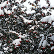 Berries And Snow Poster