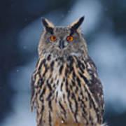 Big Eurasian Eagle Owl With Snowflakes Poster