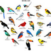 Big Set Birds. Birds Flying, Animals Poster