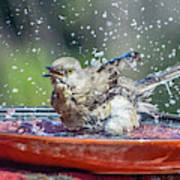 Bird In A Bath Poster