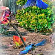 Bluejays Landing San Pedro Poster