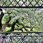 Bridge Through Live Oaks Poster