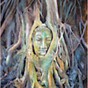 Buddha Head In Tree Roots Poster