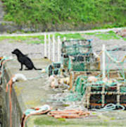 Burnmouth Harbour With Dog On Pier And Lobster Pots Poster