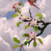 Cardinal In Apple Tree Poster