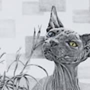 Catnip Poster