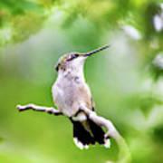 Charming Hummingbird Square Poster
