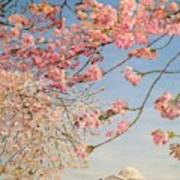 Cherry Blossoms At The Tidal Basin Poster