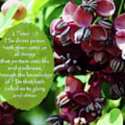 Chocolate Divine - Verse Poster