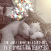 Christmas Nap Quote Poster