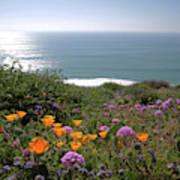 Coastal Bouquet Poster