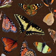 Collage Of Ca Butterflies Poster