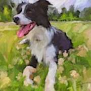 Collie Flowers Poster