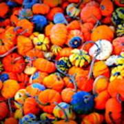 Colorful Tiny Pumpkins Poster