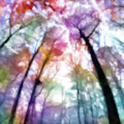 Colorful Trees Xiii Poster