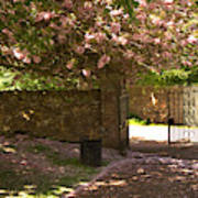 Crichton Church Entrance Gate And Tree In Pink Bloom Poster
