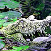 Crocodile Profile. Poster