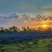 Daybreak In The Land Of Bluebonnets Poster