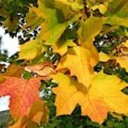 Days Of Autumn 24 Poster