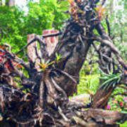 Dead Tree With Elk Horns Poster