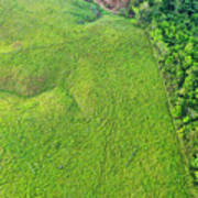 Deforested Pasture And Rainforest, Mamoni Valley Poster