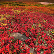 Denali National Park Fall Colors Poster