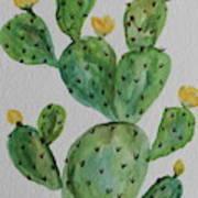Desert Garden Beauty Poster