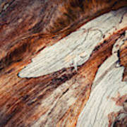 Detail Of Abstract Shape On Old Wood Poster