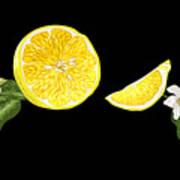 Digital Citrus Poster
