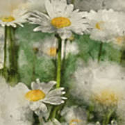 Digital Watercolor Painting Of Wild Daisy Flowers In Wildflower  Poster