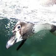 Dive Penguin Dive Poster