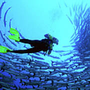 Diver In The Middle Of A School Of Fish Poster