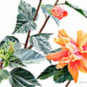 Double Orange Hibiscus With Buds Poster