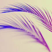 Duotone Background Of Tropical Palm Leaves Poster