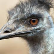 Emu Print 9092 Poster