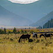 Equine Valley Poster