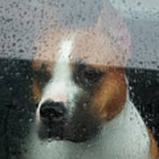 Faithful Dog Sitting In A Car And Poster