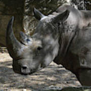 Fantastic Profile Of A Rhino With A Long Horn Poster