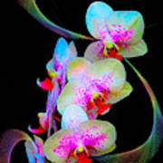 Fantasy Orchids In Full Color Poster