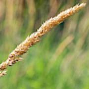 Field Grass Poster