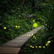 Fireflies In The Bush At Night In Taiwan Poster
