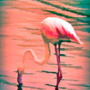 Flamingo Art Poster